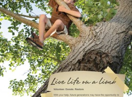 Ad Design: American Chestnut Foundation